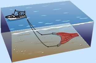 沖合底びき網漁業