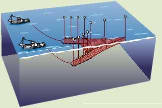 船びき網漁業