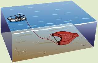 小型底びき網漁業
